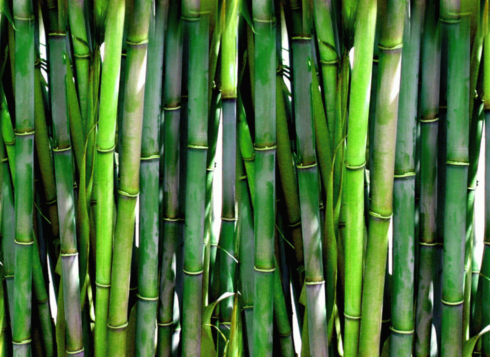 uses for bamboo