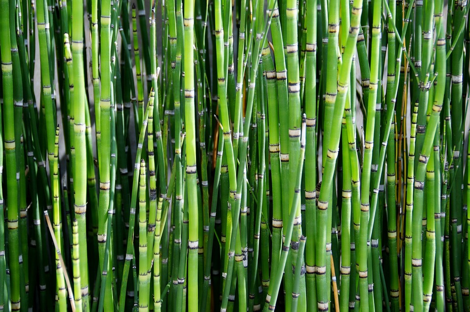 survival uses for bamboo