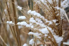winter survival foods